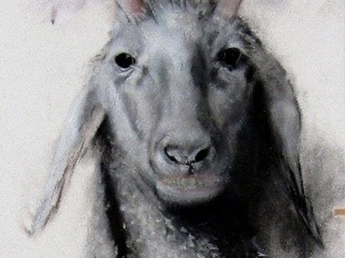 """The Goat - Title: """"The Goat"""""""